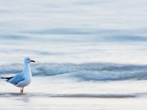 Gaviota en la orilla del mar