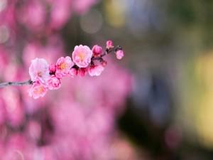 Pequeñas flores rosas en una rama