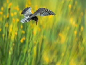 Ave volando sobre un campo de flores