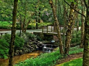 Puente que cruza un arroyito