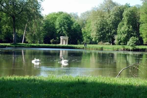Cisnes en los jardines del Castillo de Chantilly (Francia)