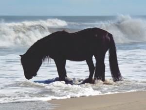 Un caballo tomando agua del mar