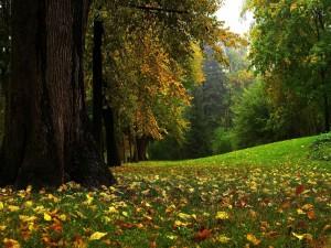 Hojas otoñales sobre la hierba del bosque