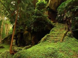 Escaleras en un bosque misterioso