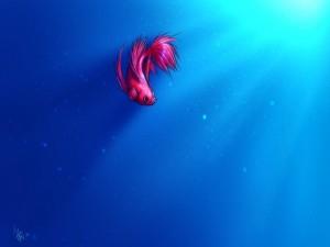 Un bonito pez beta nadando