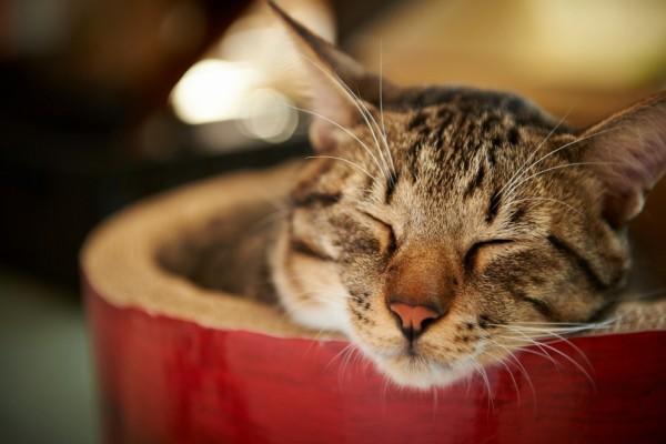 Un gato dormido en su cesto
