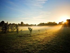 Radiante sol iluminando el campo