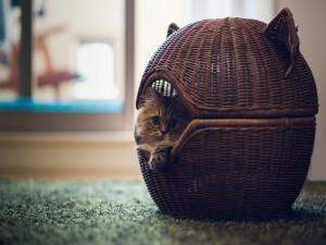 Gato dentro de un bonito cesto
