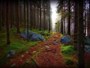 Bonito camino en un bosque