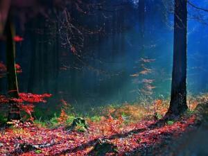 Luz solar penetrando en el bosque