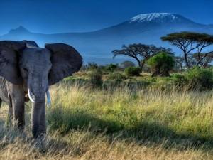 Elefante africano caminando en soledad