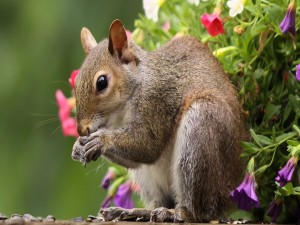 Ardilla comiendo pipas junto a unas flores