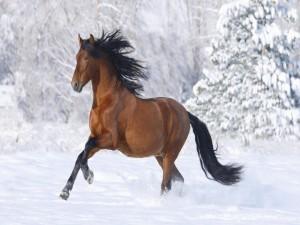 Caballo trotando en la nieve