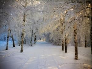 Nieve entre los árboles