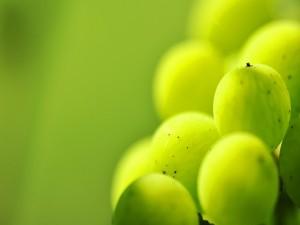 Bayas verdes