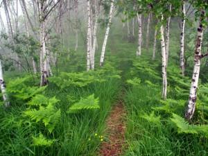 Helechos verdes entre los árboles de un bosque