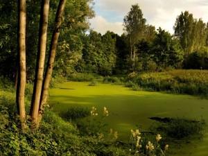 Pantano verde rodeado de árboles