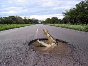 Cocodrilo en una carretera