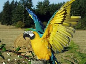 Loro con las alas abiertas posado sobre un tronco