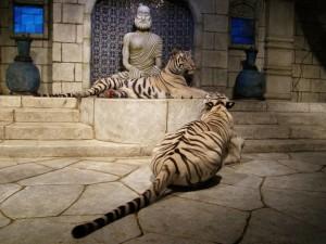 Dos tigres blancos sentados frente a una estatua