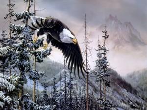 Vuelo de un águila calva