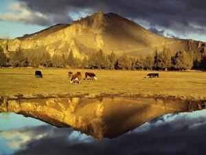 Vacas pastando junto al agua