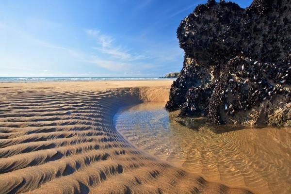 Moluscos en la roca de una playa