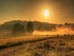 Sol iluminando un campo