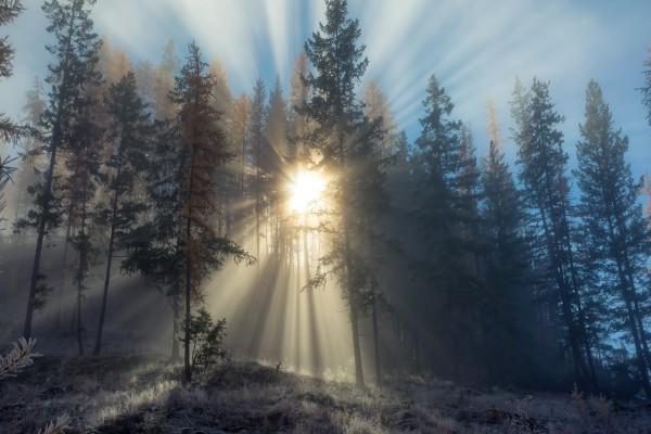 El sol brillando tras unos árboles