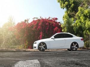 Un BMW Serie 3 Coupe junto a unos árboles