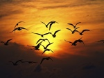 Aves volando al anochecer