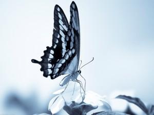 Imagen de una mariposa sobre una flor