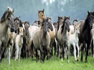 Manada de caballos salvajes corriendo por la pradera