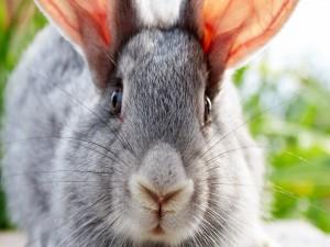 La cara de un conejo