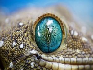 El ojo de un lagarto
