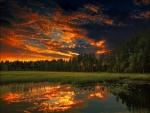 Hermoso cielo sobre un claro del bosque