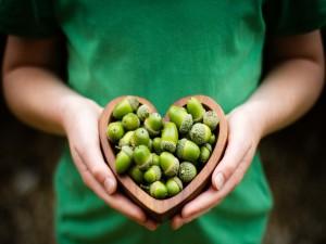 Manos sosteniendo un corazón lleno de bellotas verdes