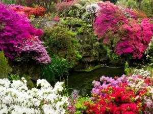Coloridas flores alrededor de un estanque