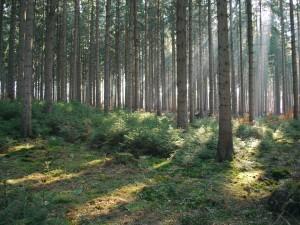 Sol en el interior de un bosque
