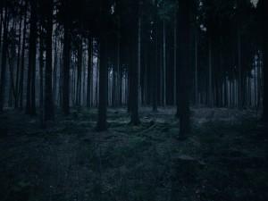 Anochece en el bosque