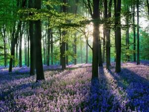 Sol iluminando las flores y árboles del bosque