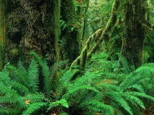 Helechos y árboles en el interior de un bosque