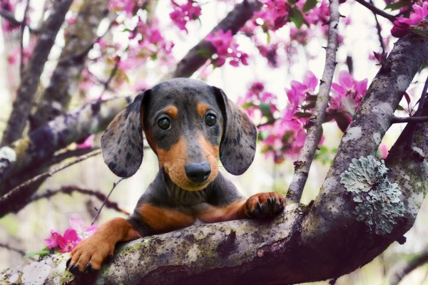 Perro observando detrás de la rama de un árbol