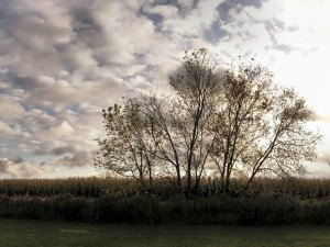 Árboles en el campo en un día nublado