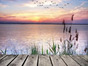 Contemplando las aves y el lago desde el muelle de madera