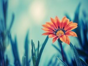 Bonita flor con pétalos naranjas
