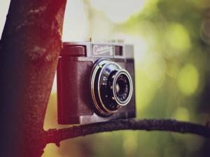 Cámara de fotos sobre la rama de un árbol
