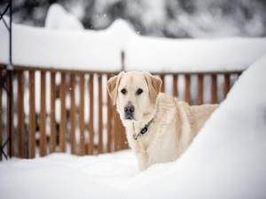 Un perro en la fría nieve
