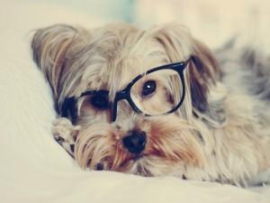 Un perro con gafas
