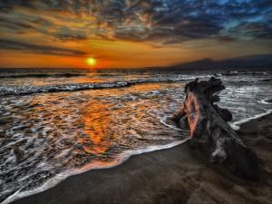 Gran tronco en una playa